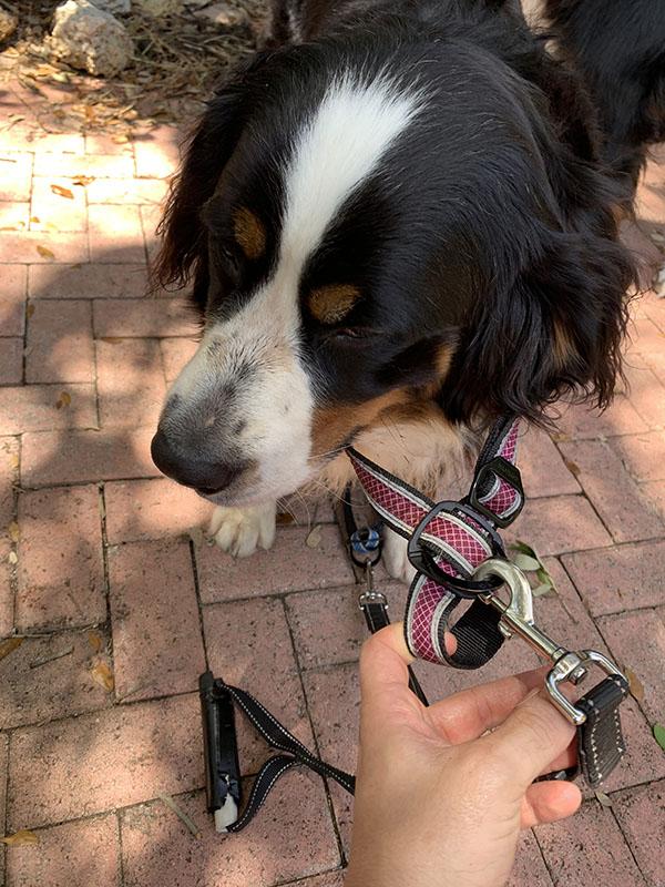 problem with kurgo dog head halter