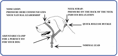 gentle leader dog head halter diagram