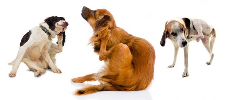 03-3dogs-scratching-640×280-opt