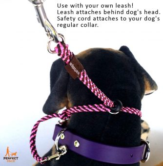 Perfect Pace dog head halter fitting