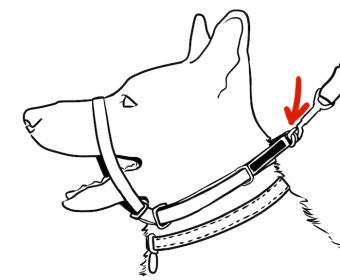 canny collar dog head halter diagram